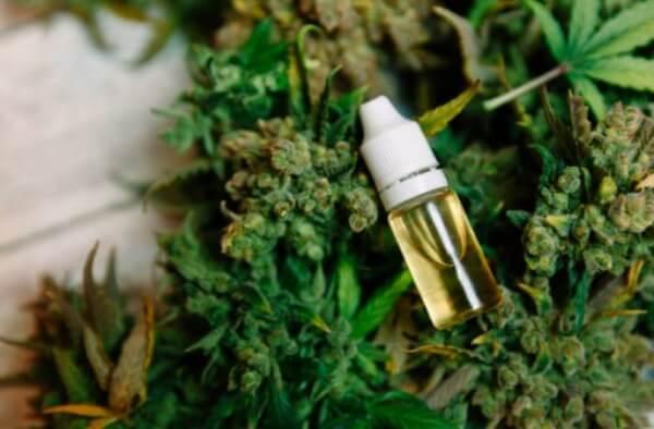 cannabis, oleo, maconha medicinal