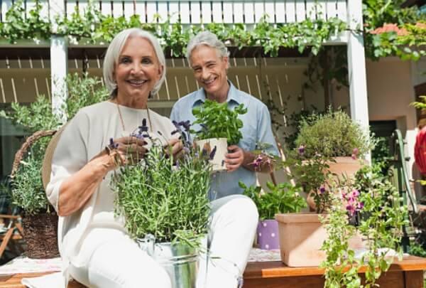 ervas para potência e fertilidade