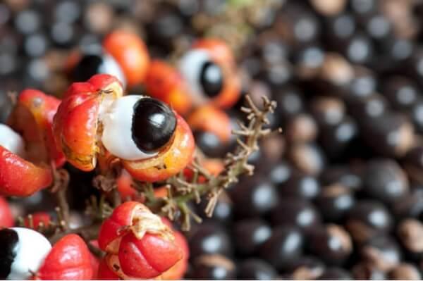 Fruta e raiz de guaraná